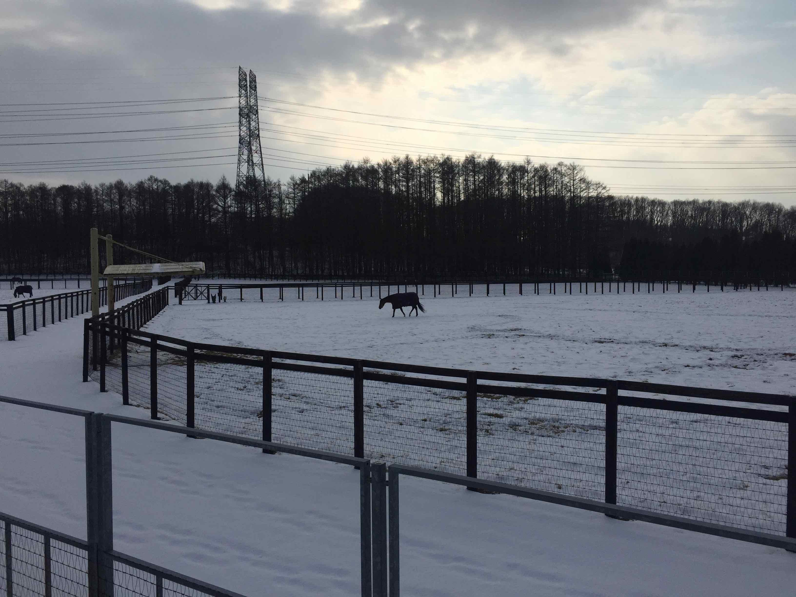 雪の中で放牧中の馬