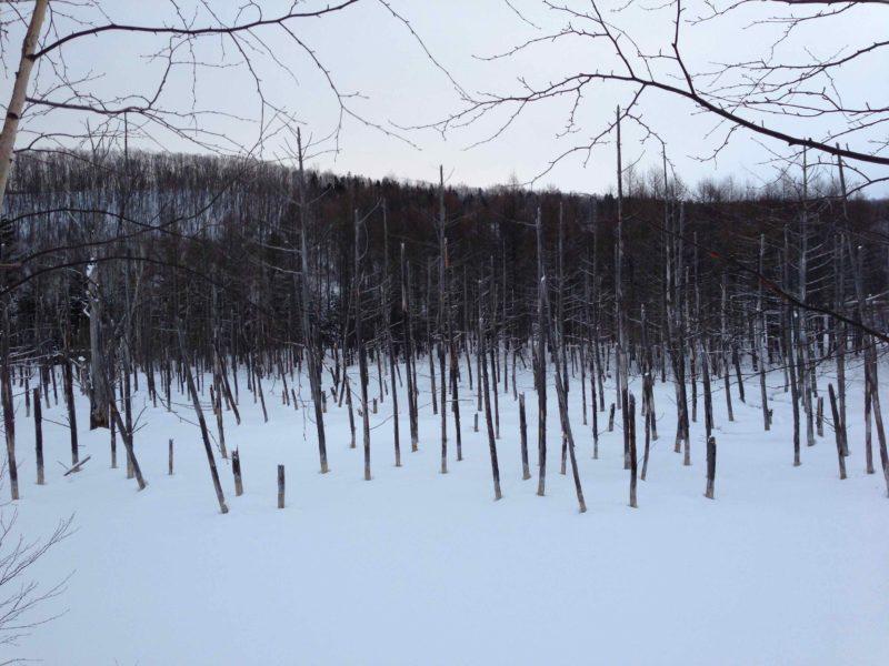 真冬の青い池