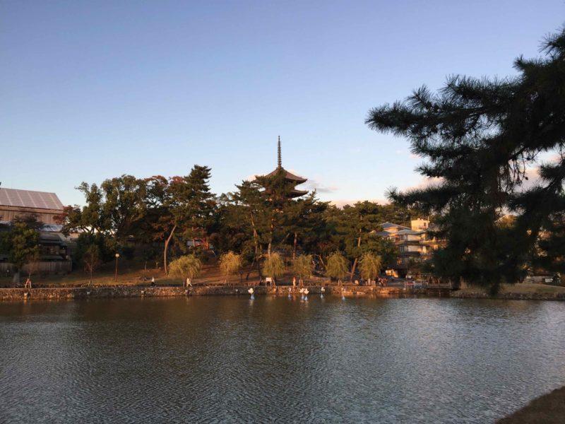 猿沢池から見る興福寺