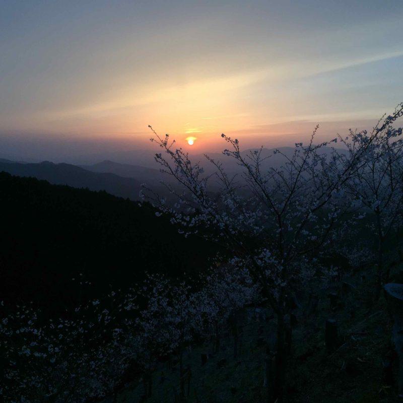 吉野山の夕陽1